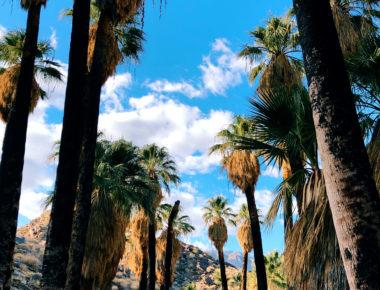Palm Desert/Yucca